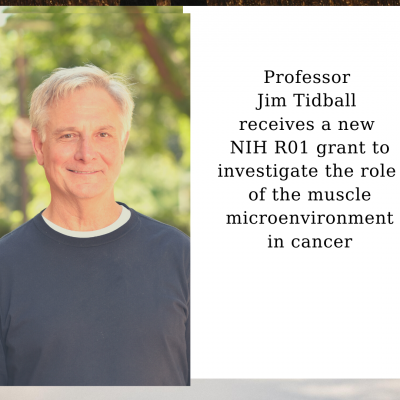 Professor Jim Tidball receives a new NIH R01 grant to investigate the role of the muscle microenvironment in cancer
